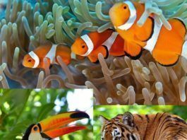 A biodiversidade da natureza. Fotos: Krzysztof Odziomek (peixes); Geanina Bechea (tucano); Eduard Kyslynskyy (tigre) e BlackHoleSun Photography (cachoeira) / Shutterstock.com