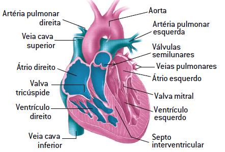 Conclusão sobre anatomia e fisiologia humana